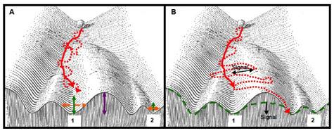 Waddington-epigenetic-landscape-bottom475.jpg